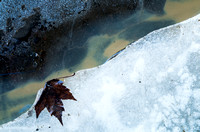 Leaf on ice, Vaudreuil, Quebec, Canada